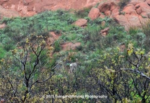 Spot the deer!